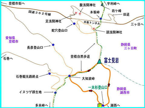 Fujimiiwaipponsugi