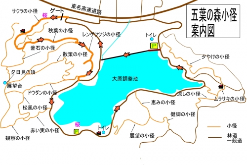 Ooharasakura1